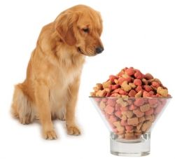 There are plenty of homemade dry dog foods that are easy to make. Most are like stew or just a slosh of a combination of meats and vegetables....