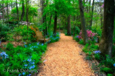 Arboretum at JMU. so pretty