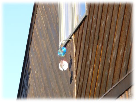 Siding Woodpecker Deterrent  #woodpecker #woodpeckers #pigeon #pigeons #bird #birds #sandspublishing