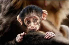 Image result for beautiful animals