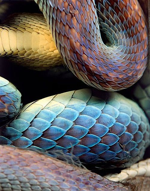 pastel, repeated, rough, colorful, curved, skin, animal