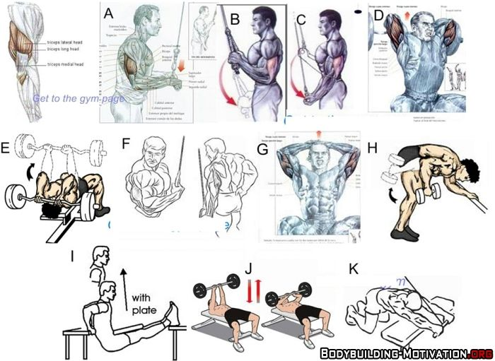 11 Top Triceps Workouts | Body Building | Pinterest ...