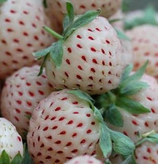 """I want to grow this!   A nearly extinct type of Strawberry is now being marketed in Europe. It is white in color and has deep-set red seeds. It tastes like a pineapple and hence is named """"Pineberry""""."""