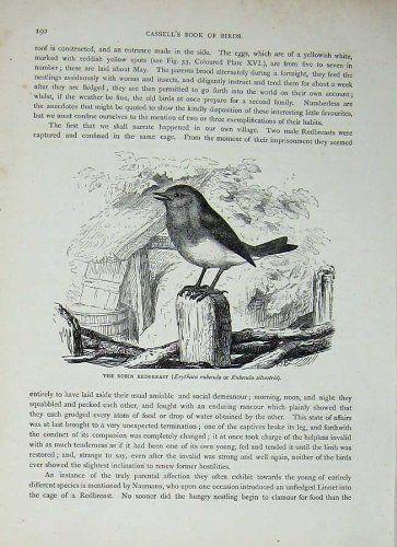 Uccello di Canto di Pettirosso degli Uccelli C1870 Robin di Cassell