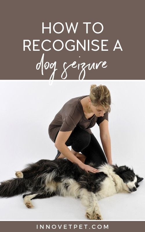 how to know if dog has seizure