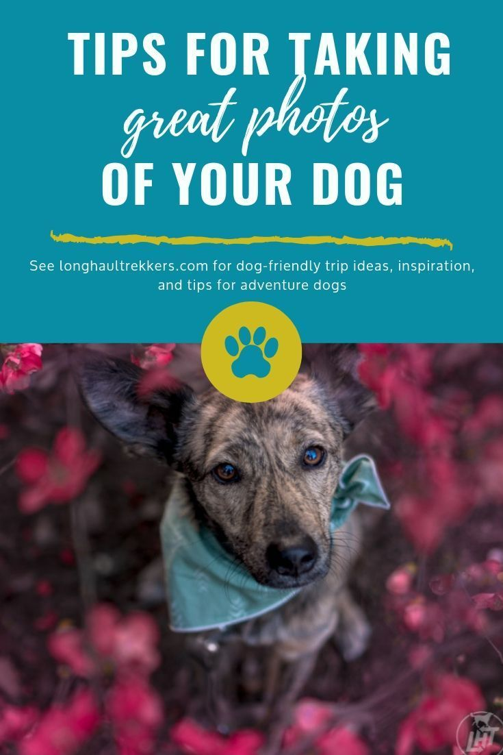 How To Take A Great Picture Of Your Dog