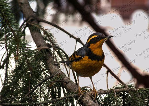 DIGITAL DOWNLOAD PHOTOGRAPHY bird photo nature by #wallart #naturelover #integritytt @EarthRT @Relay_RTs  Turtlesandpeace