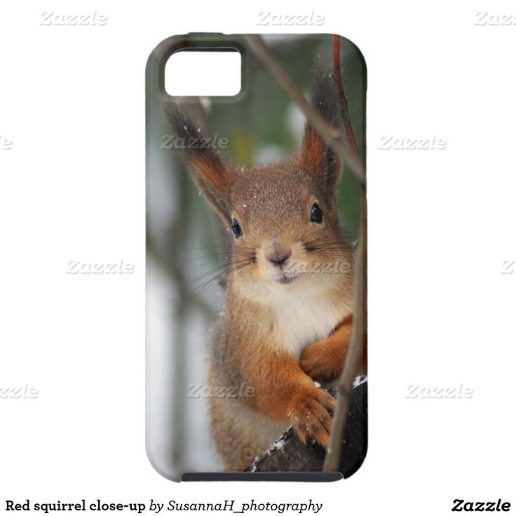 Red squirrel close-up iPhone 5 cover
