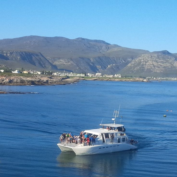 Southern Right Charters Whale watching boat. Hermanus - South Africa