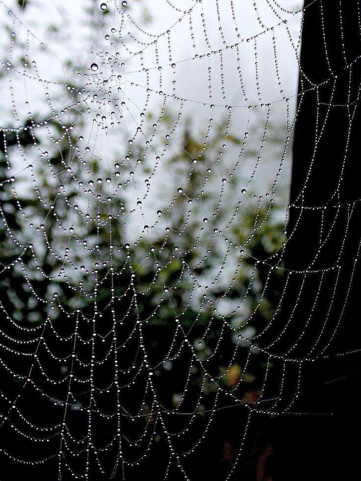 Cobweb, web with raindrops. Foggy wetter. Fog. Slovakia High Tatras, Štrbské pleso