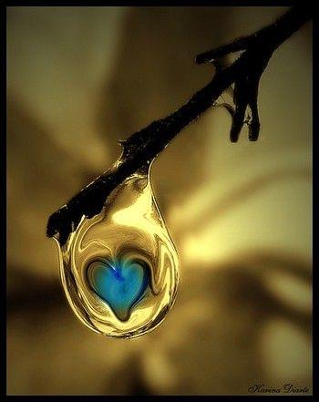 小枝から滴る雫の中に、ブルーのハートが浮かび上がって、なんともロマンチック! そのまま落ちないで!と言いたくなってしまいそうです。