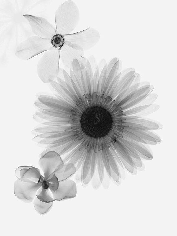 Xray flowers. Interesting idea for tattoo.