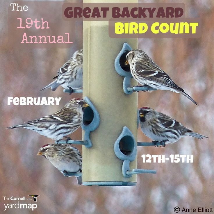 The Great BackYard Bird Count is your big opportunity to ...
