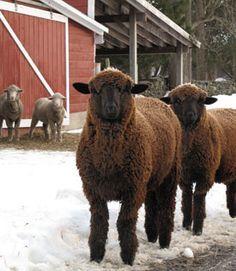 Morehouse Farm Merino     KnitKits:   Critters    —5