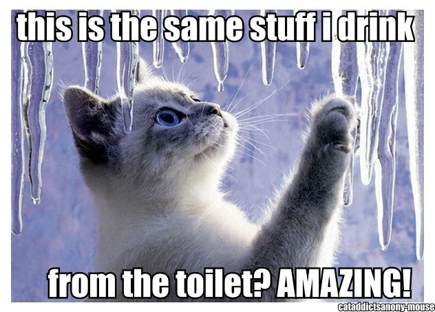 #lolcat: Funny Kitty, Kitty Cat, Ice Princesses, Ice Crystals, Christmas Fun, Winter Photography, Funny Cat, Winter Wonderland