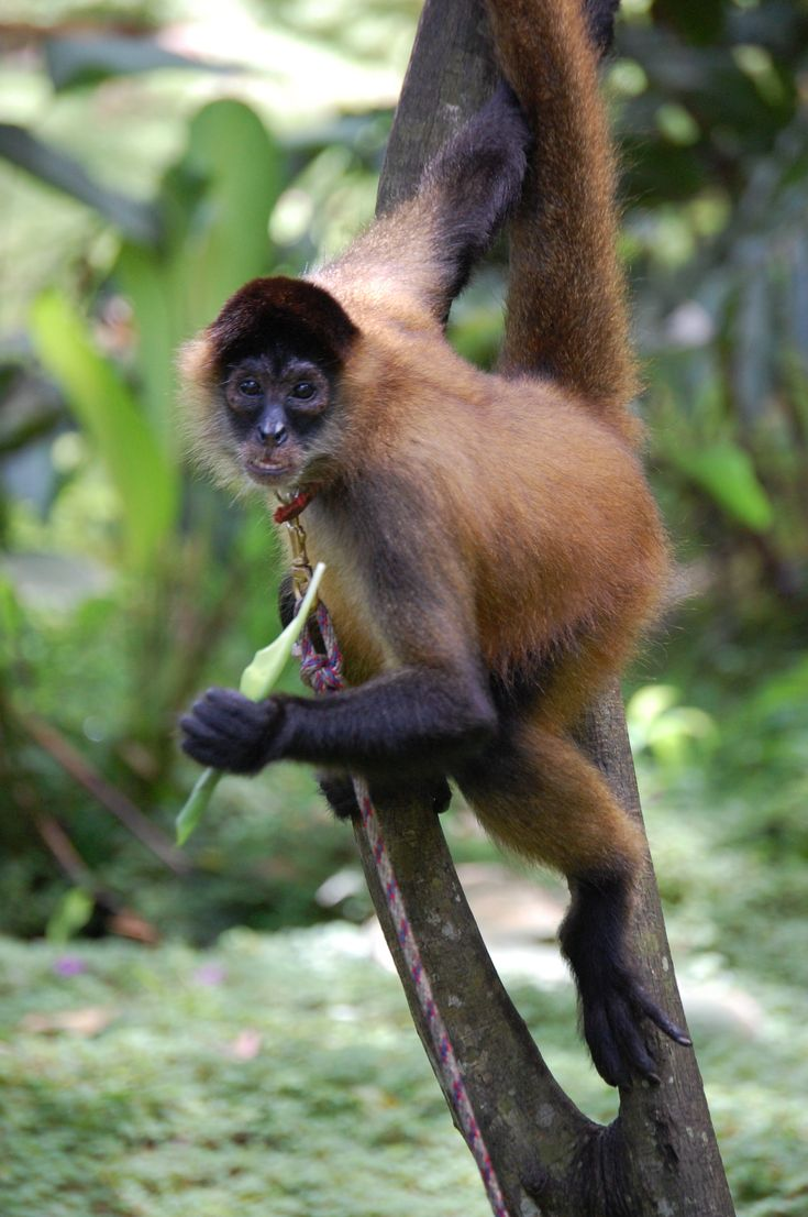 Different Types of Monkeys Facts and Information