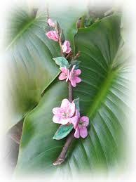 Risultati immagini per fiori di pesco di panno lenci