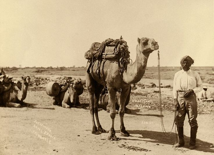 Afghan cameleers played a significant role in opening up the inland of Australia's during the 1800s