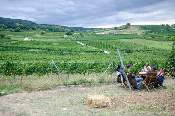 Wein trinken mitten in den Weinbergen auf der #Genussmeile zwischen Bad Vöslau und Mödling.
