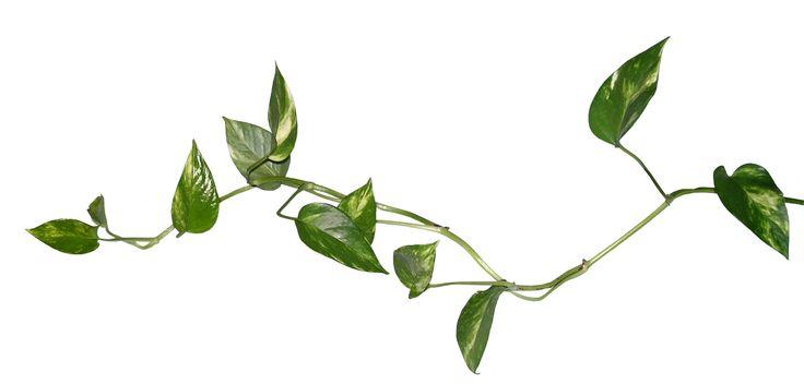 Plante recherche google inspiration pinterest for Recherche plante