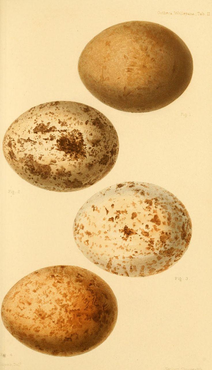 137 best eggs images on pinterest vintage birds bird nests and