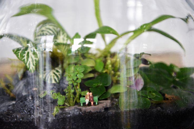 Les 25 meilleures id es de la cat gorie chlorophytum sur for Plante a suspendre interieur