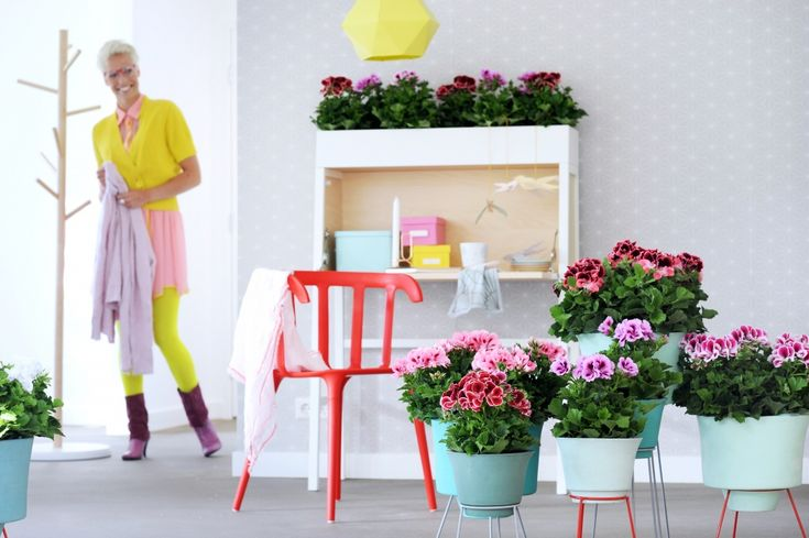 Franse Geranium, Woonplant van de maand maart 2015 | Palazzo Lelystad http://palazzolelystad.nl/franse-geranium-woonplant-van-de-maand-maart-2015