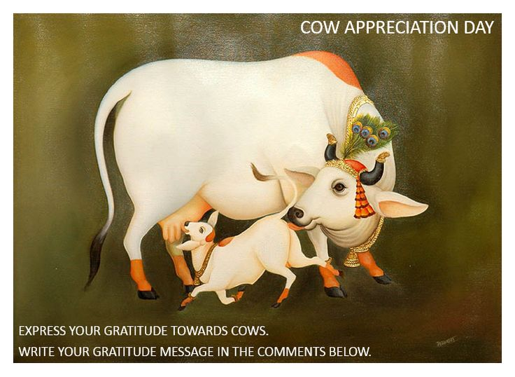 Today is Cow Appreciation Day. We request devotees to express their gratitude towards Mother Cow, by writing a message of gratitude in the comments below. For supporting the maintenance of our goshala visit www.iskconbangalore.org/sevaslist