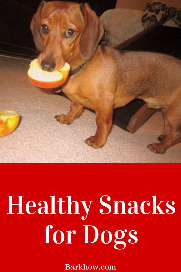 Healthy snacks for dogs dog snacks dog safe food
