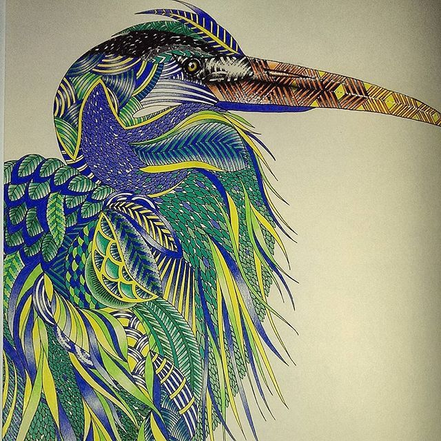 ShareIG Heron Millie Marottas Animal Kingdom Milliemarotta Colour Colouredpencil
