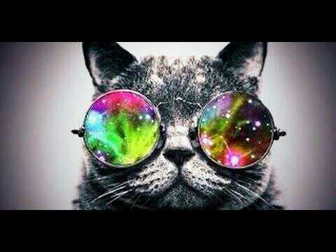 normal cat with a psychedelic styled glasses | mood board ...