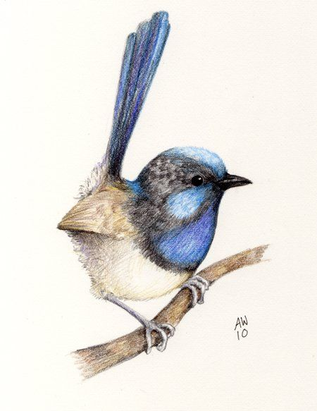 Blue Line Art Painting : Best blue wren inspired arts and crafts images on