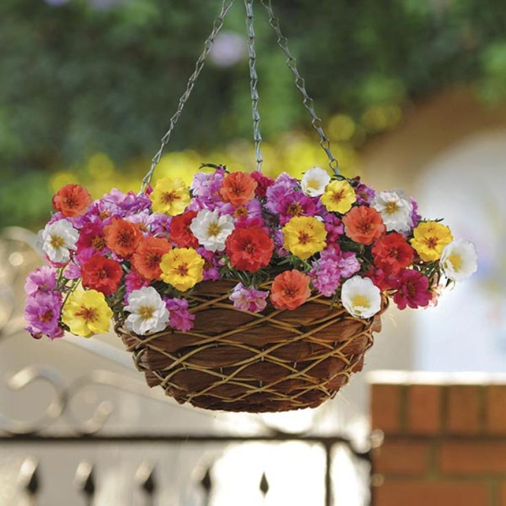 Hanging baskets are a much needed addition to every garden, having the ability to connect it to the house, bring a splash of color or simply draw atte