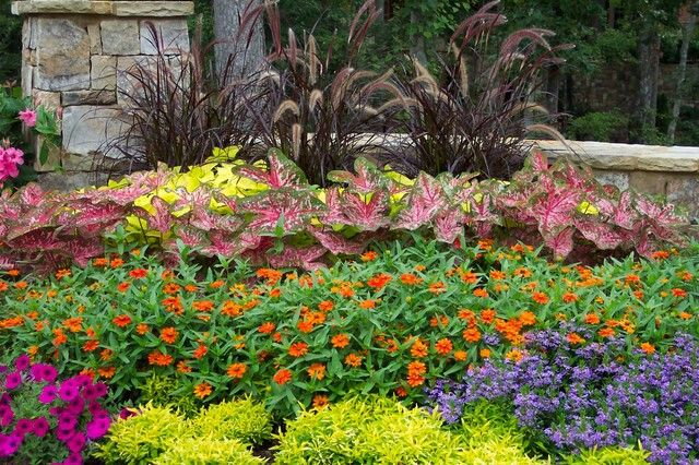 Portulaca home design ideas pictures remodel and decor - Summer Garden Zinnias Ageratum Blue Daze Periwinkle