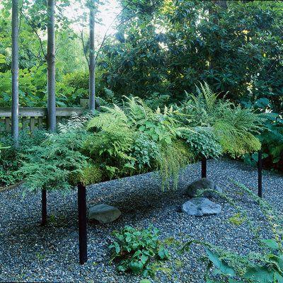 Planting a low-water fern garden