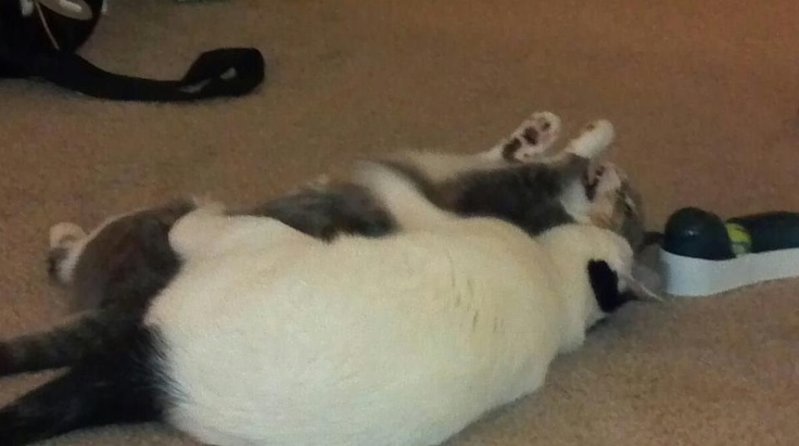 My cats have a violent man-love for each other ^_^