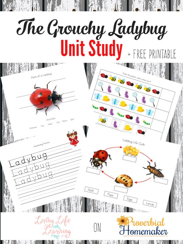 199 best Lap-n-Note Homeschool images on Pinterest | Preschool ...