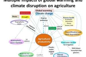 Berbagai dampak perubahan iklim terhadap sektor pertanian.