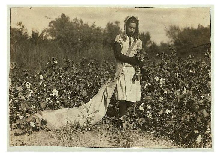 Baumwollernte:  Die elfjährige Callie pflückte etwa 75 bis 125 Pfund Baumwolle...