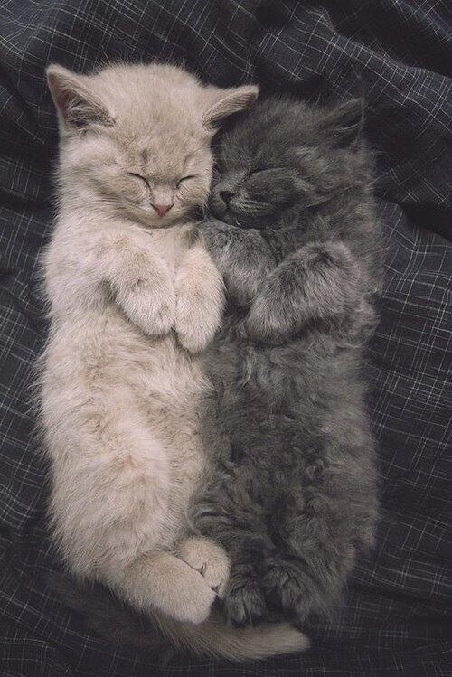 white and black cats sleep ...