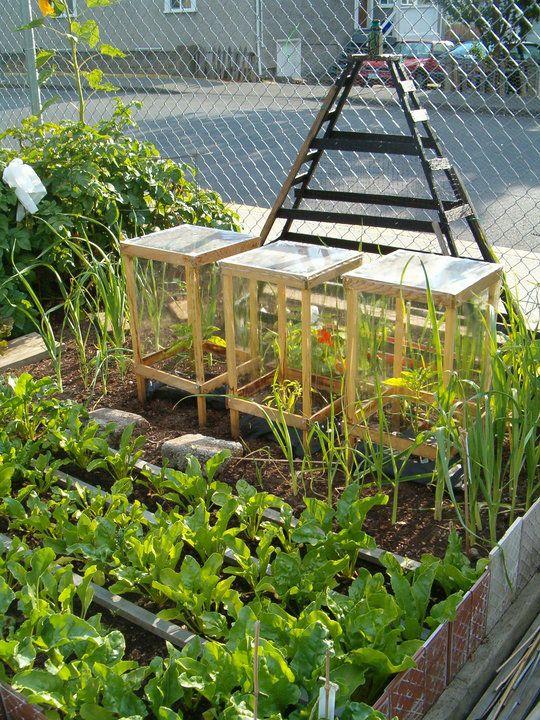 331 mejores im genes de ideas para el huerto urbano en for El jardin urbano