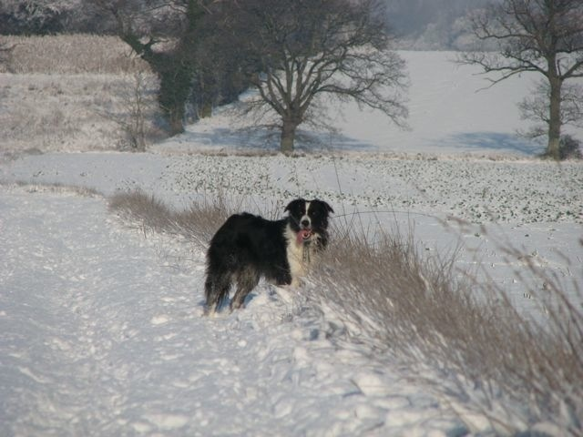 Border Collies - Yes?