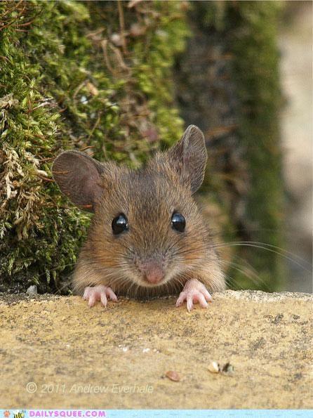 Mein kleines süßes Mäuschen, ich hab dich so lieb!