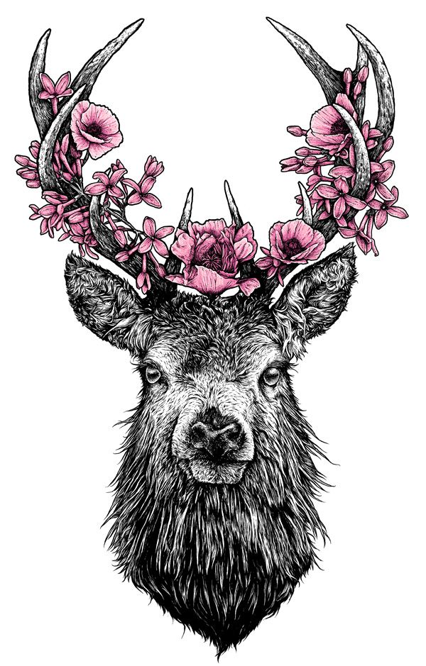 81 best Animal ilustrations images on Pinterest | Drawings, Deer ...