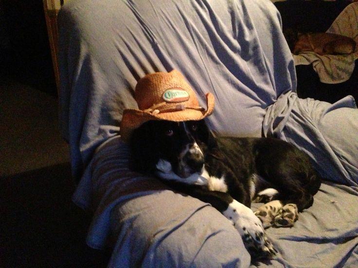 Watching Street Outlaws ,Farmtruck fan