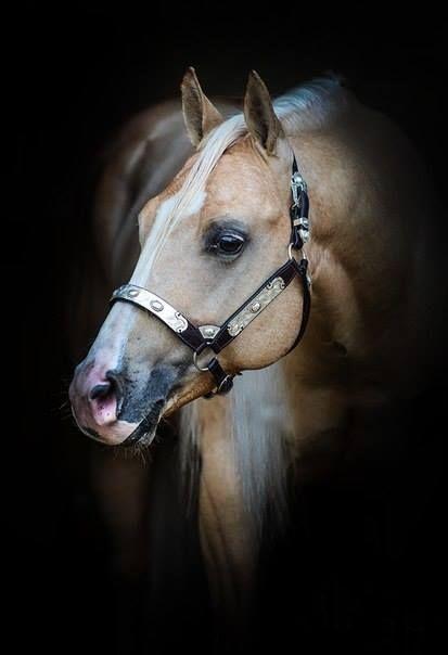 4759 best Horses I Lov...