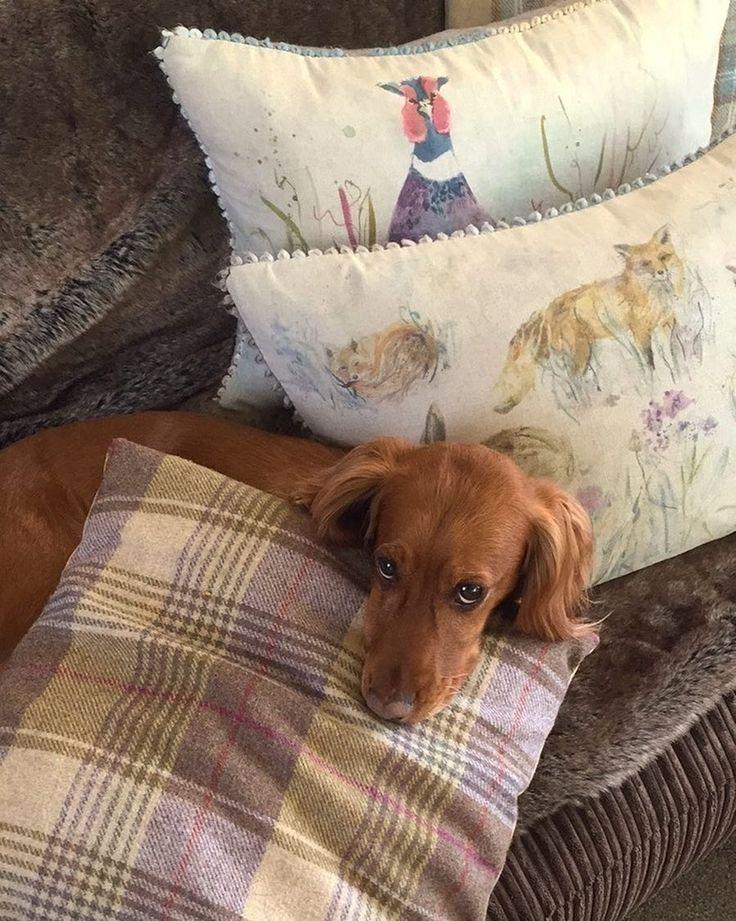 а как проходят ваши #выходные, друзья? @izzyeastwood #подушки #voyagemaison #собака #dog #pillows #ткани #дизайнинтерьера #животные #fabric