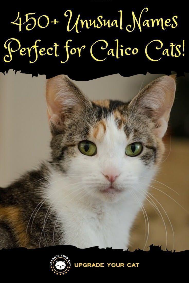 450 Unusual Calico Cat Names Upgrade Your Cat In 2020 Calico Cat Calico Cat Names Cat Names
