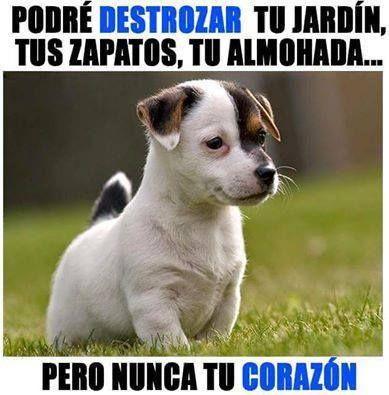 Nunca tu corazón!!  https://soyunperro.com/adoptar-un-perro-cachorro/