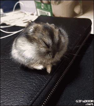 gifsboom:  Hamster rolling down into a sleep. [video]